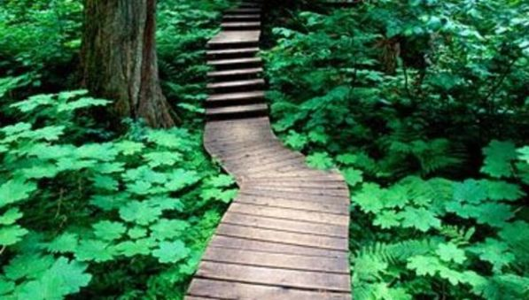 Wooden Planks Leading Down a Zen Pathway